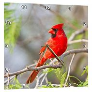 3dRose Northern Cardinal, male Starr, Texas, USA., Wall Clock, 10 by 10-inch
